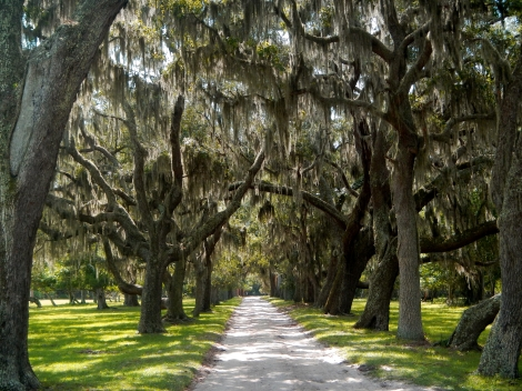Spanish moss laden live oaks lead the way around the island.
